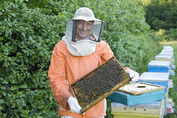 Beekeeper Holding Honeycomb with Honey Bees