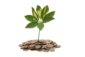 Concept of a plant and a lot of golden coins isolated on white