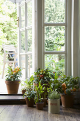 Potted plants in house
