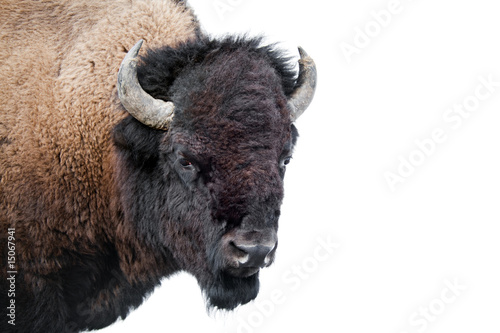 Deurstickers Bison American Bison isolated on white