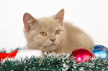 kitten playing with Christmas Decorations