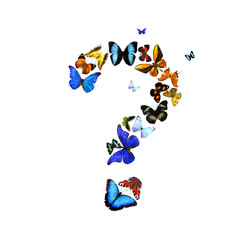 Fragezeichen aus Schmetterlingen