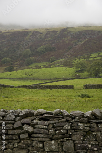Fields in Yorkshire Dales, Yorkshire, England