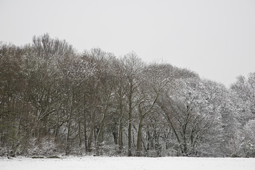 UK, snowy field and forest