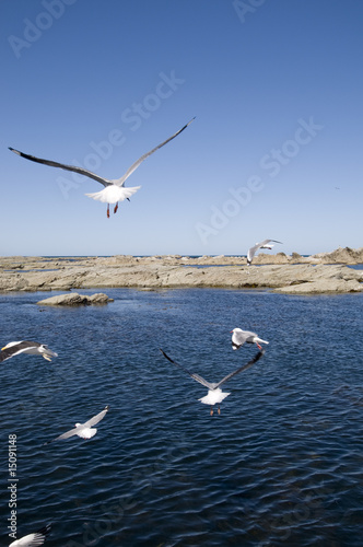 segulls and ocean, Kaikoura, New Zealand