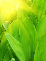 Abstract vegetative background in the light of the sun