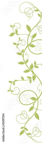 liane courbe vectoriel - ai - tige vert nature sur fond blanc