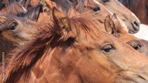 pferdeaugen - 15104934