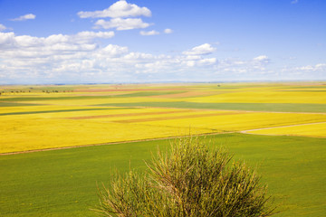 Castilla fields at spring