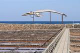 Whale skeleton and saline,  Fuerteventura Spain poster