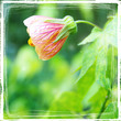 Quadro meadow flower - picture with artistic border