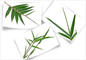 des tiges de bambou