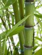 Fototapeten,bambus,feng shui,flora,pflanze