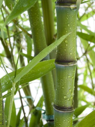 Fototapeten,bambu,feng shui,blatt,flora