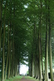 avenue of beach trees. symbol of hope/ faith. way to light poster