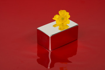 Yellow flower on top of a mirror-cube with a red background