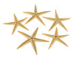 Starfish on a white background. (isolated)