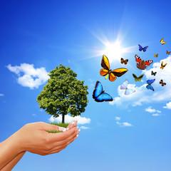 Die Erhaltung der Ökologie
