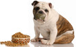 dog on a diet - bulldog sitting beside full bowl of food