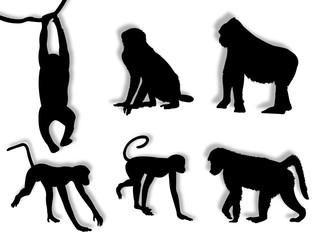 Scimmie in silhouette