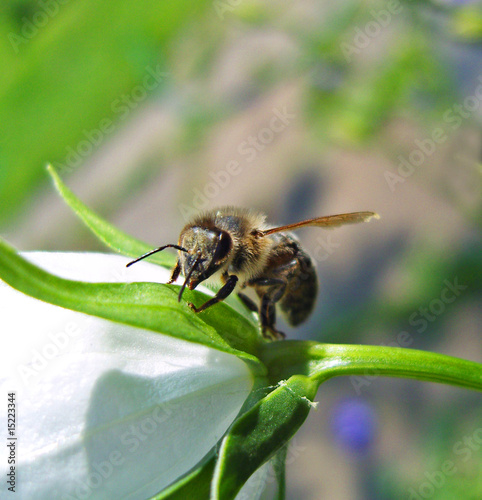Bee sitting on flower.