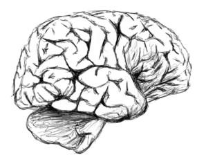 dessin d un cerveau