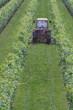 trattore sfalcia l'erba in vigna