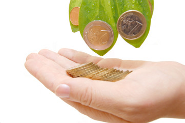 The female hand holds leaves and a coins