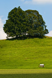 Landscape of grassland with trees and hill poster