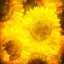 Sunflower pattern in grunge style