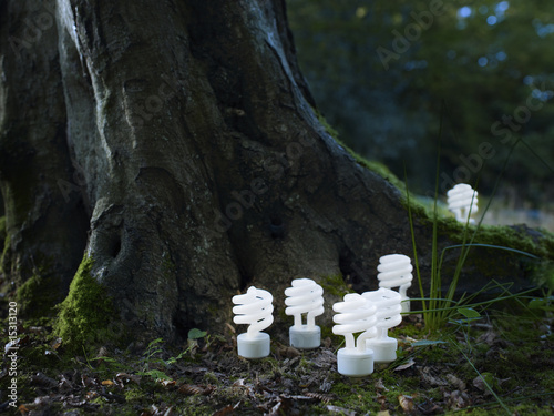 Energy saving spiral lightbulbs planted in woodland