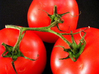 Tomatoes with vine on black background