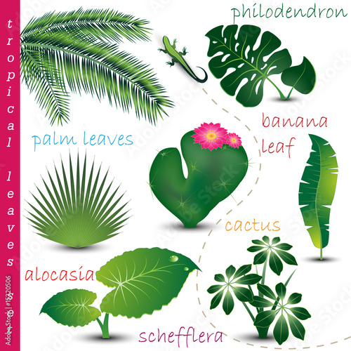 Tropical Leaves Colection