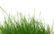 des brins d'herbe