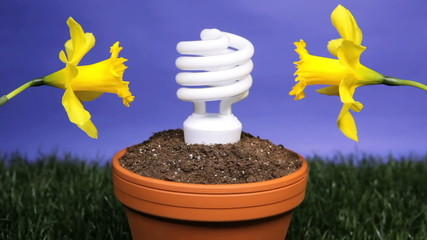 Energy saving light bulb planted in flower pot