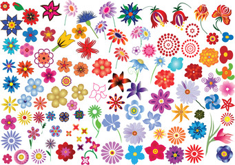 Set of colorful vector floral elements