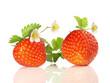 Erdbeeren mit Erdbeerblüten