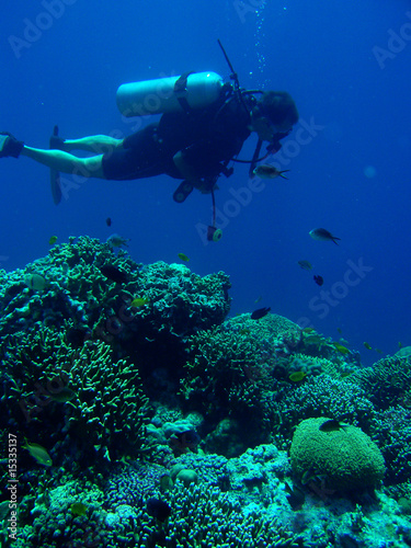 divers in moalboal_03