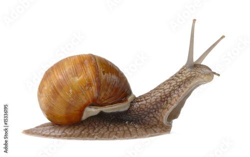 Leinwanddruck Bild Big garden snail
