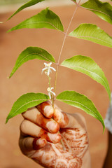 Neem Leaf and Flower holding