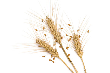 Three wheat spikes with seeds