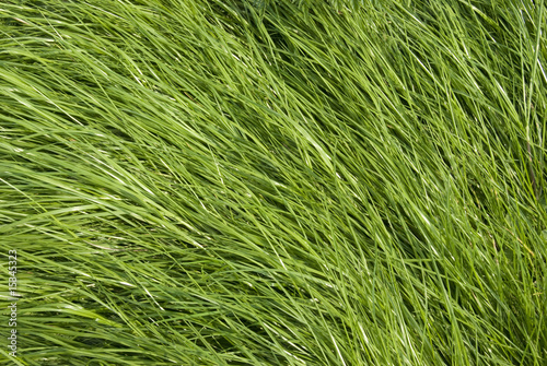 Tall Grass Texture Alpha