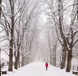 Lady walking in a snow covered boulevard poster