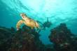 Leinwanddruck Bild - tartaruga