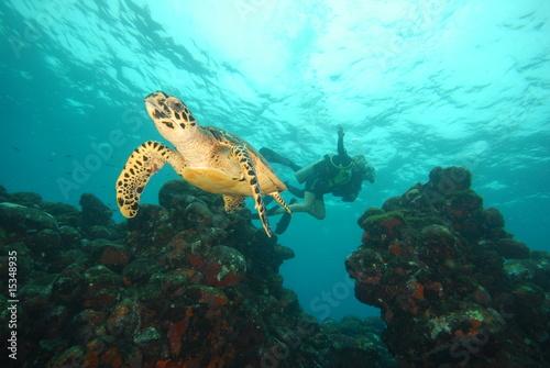 Leinwanddruck Bild tartaruga