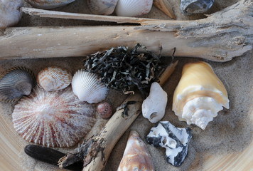 Stilleben mit Strandgut