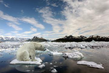 Sad Polar bear because of global warming