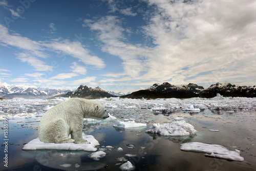 In de dag Ijsbeer Sad Polar bear because of global warming