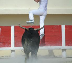 Sfuggendo dal Toro!