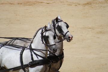Carruaje de caballos.